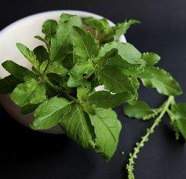 Holy Basil is considered sacred in Hindu tradition