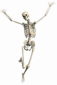 Vitamin D makes our bones stronger